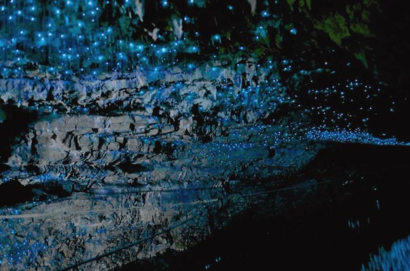 Ver Nueva zelanda y maravillarse de Cuevas de Waitomo