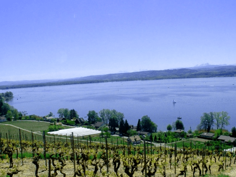 Ver Suiza y descubrir de Lago de Murten