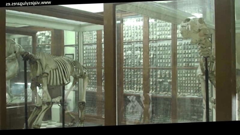 Conocer Malta y maravillarse de Museo de Ghar Dalam