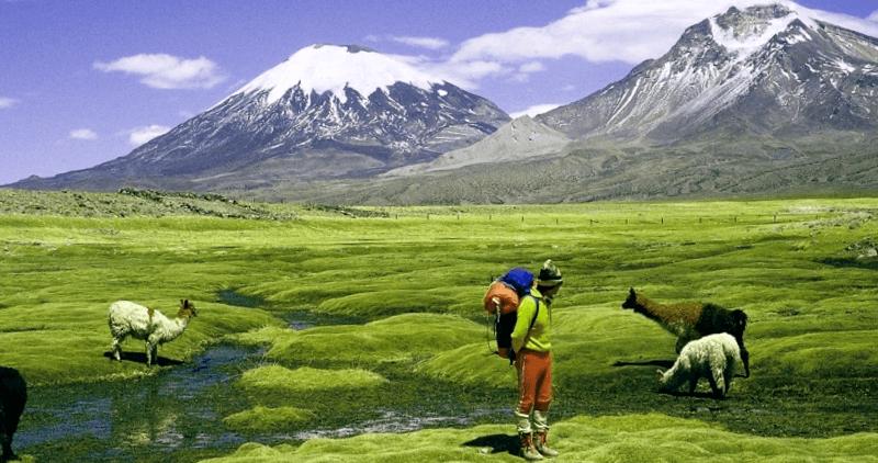 Conocer Chile y maravillarse de Parque Nacional Lauca