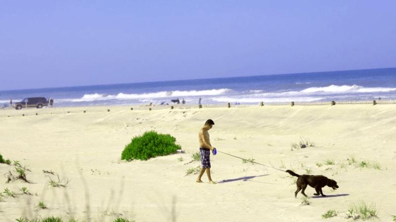 Visitar Estados unidos y maravillarse de Playa de Assateague