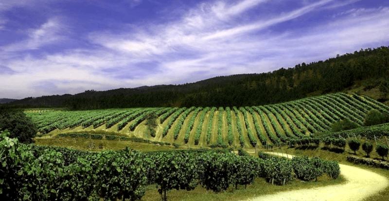 Visitar Chile y descubrir de Ruta del Vino