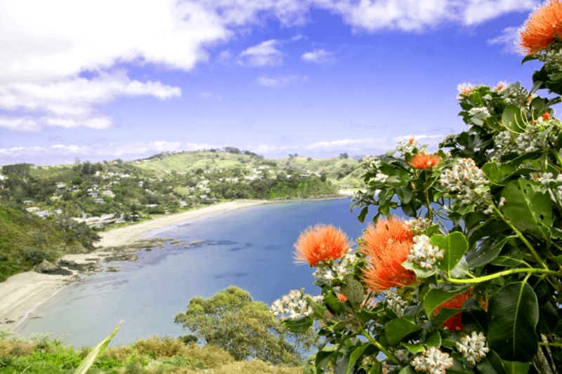 Que descubrir en Waikeke Island