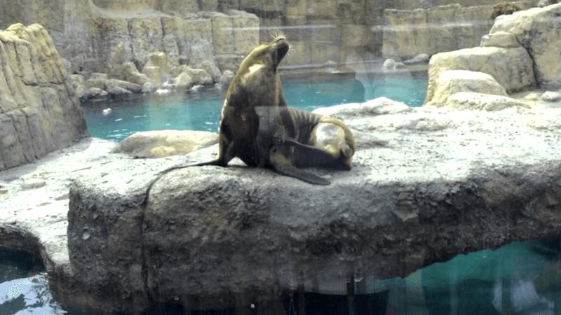 Que ver en Zoologico de Aragon