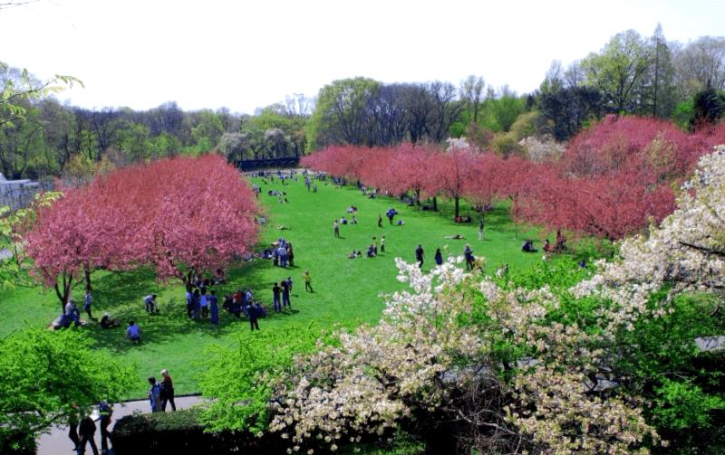 Visitar Brooklyn Botanic Garden