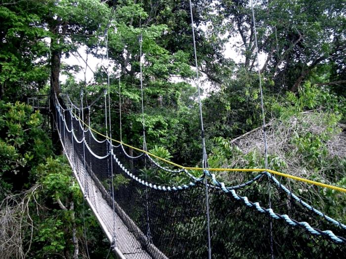 Canopy walkway que descubrir