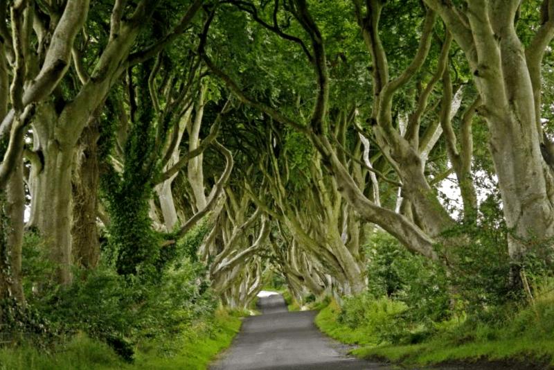 Ver Irlanda y descubrir de Dark Hedges