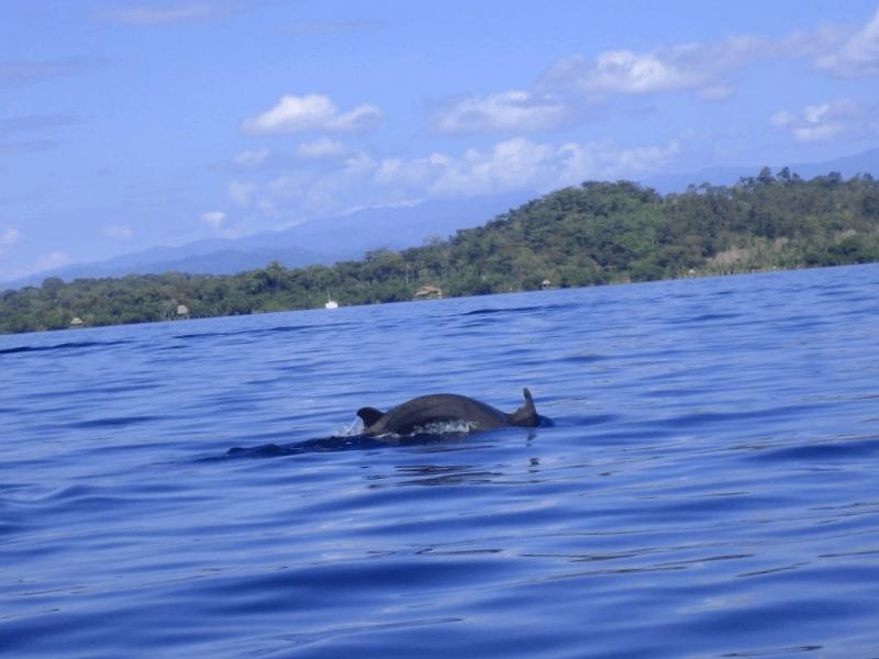 Que descubrir en Dolphin Bay