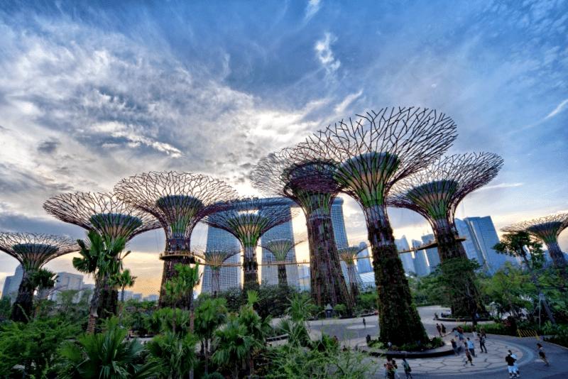 Ver Singapur y descubrir de Gardens by the Bay