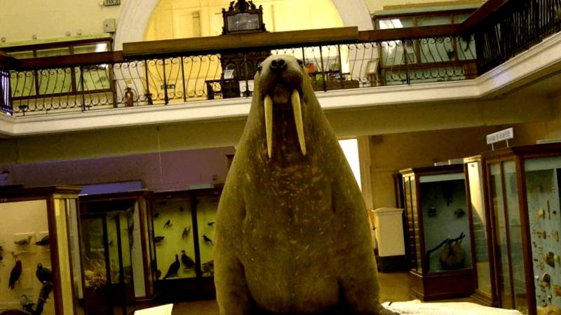 Visitar Horniman Museum & Garden
