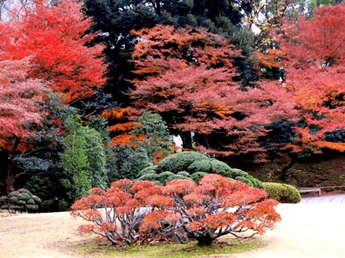 Visitar Jardines de Koishikawa Kuraken