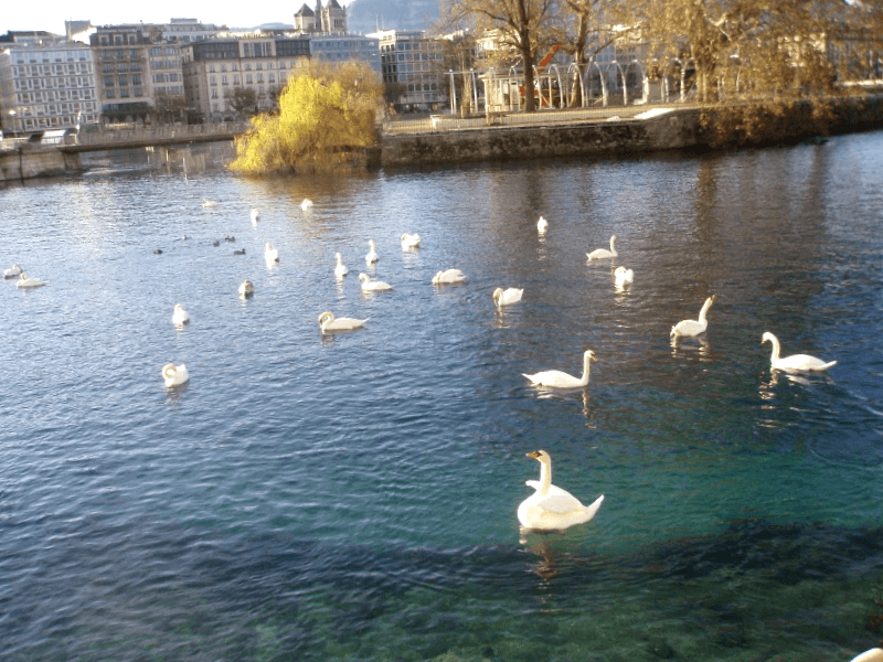 Que ver en Lago de Ginebra