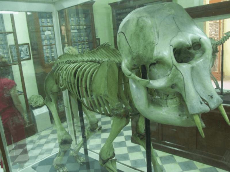Visitar Museo de Ghar Dalam