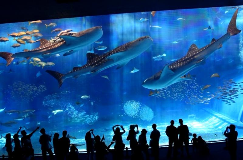 Okinawa Churaumi Aquarium que visitar