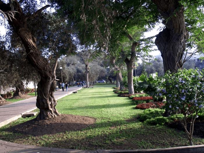 Parque El Olivar que debemos ver