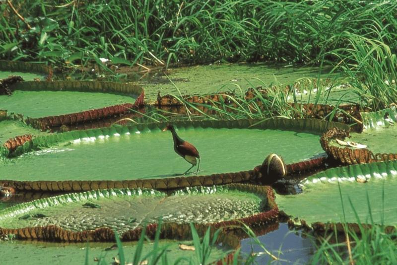 Parque Nacional Amacayacu que debemos ver