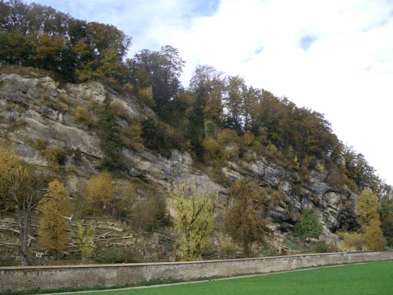 Ver Austria y descubrir de Parque zoologico