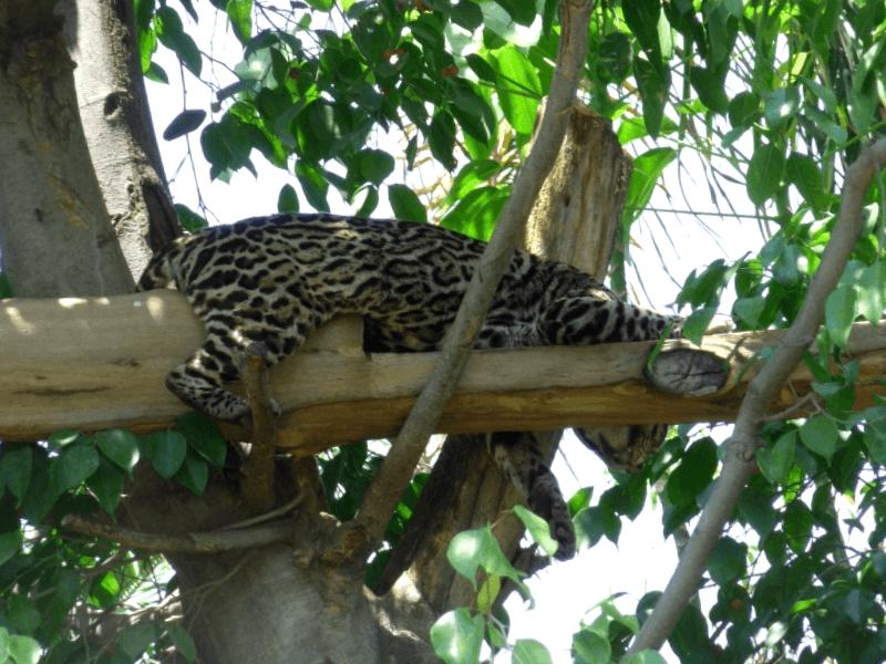 Ver Mexico y descubrir de Zoologico de Aragon